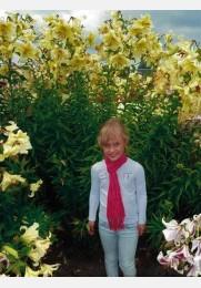 Lelija krūminė ORANIA sodinukas
