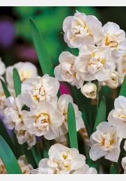 Narcizas BRIDAL CROWN
