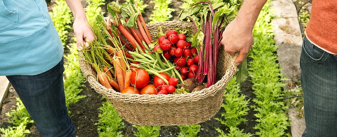 POLAN sėklos - puikaus derliaus garantija!